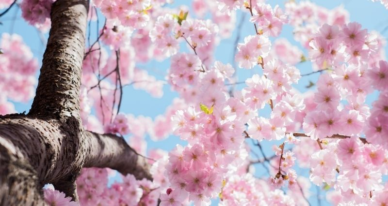 Frühlings Gartendeko Test