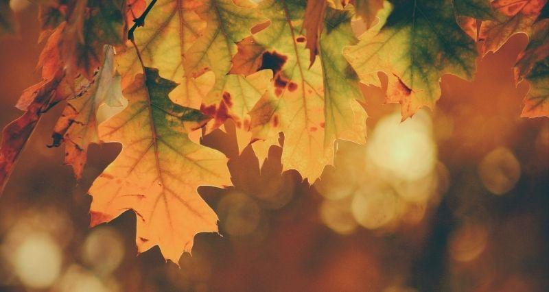 Herbst Gartendeko Test