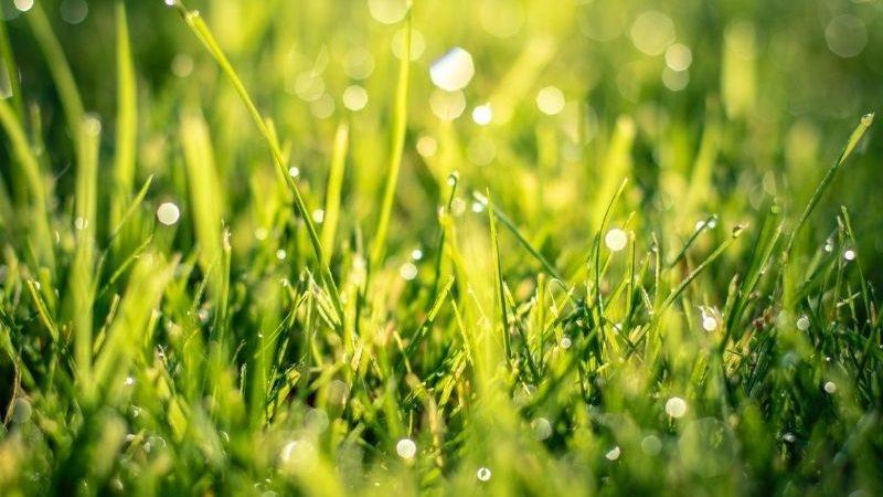 Rasen zu nass was tun? – Schritt für Schritt Anleitung