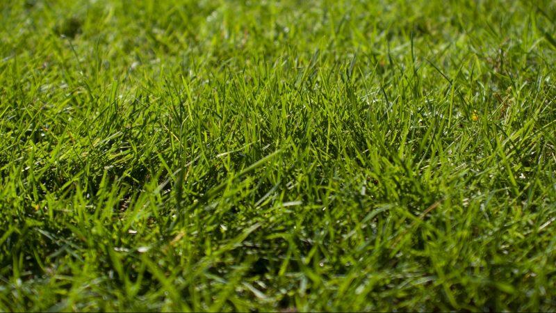 Welchen Dünger für Rasen? 3 Schritte zu einem saftig grünen Rasen
