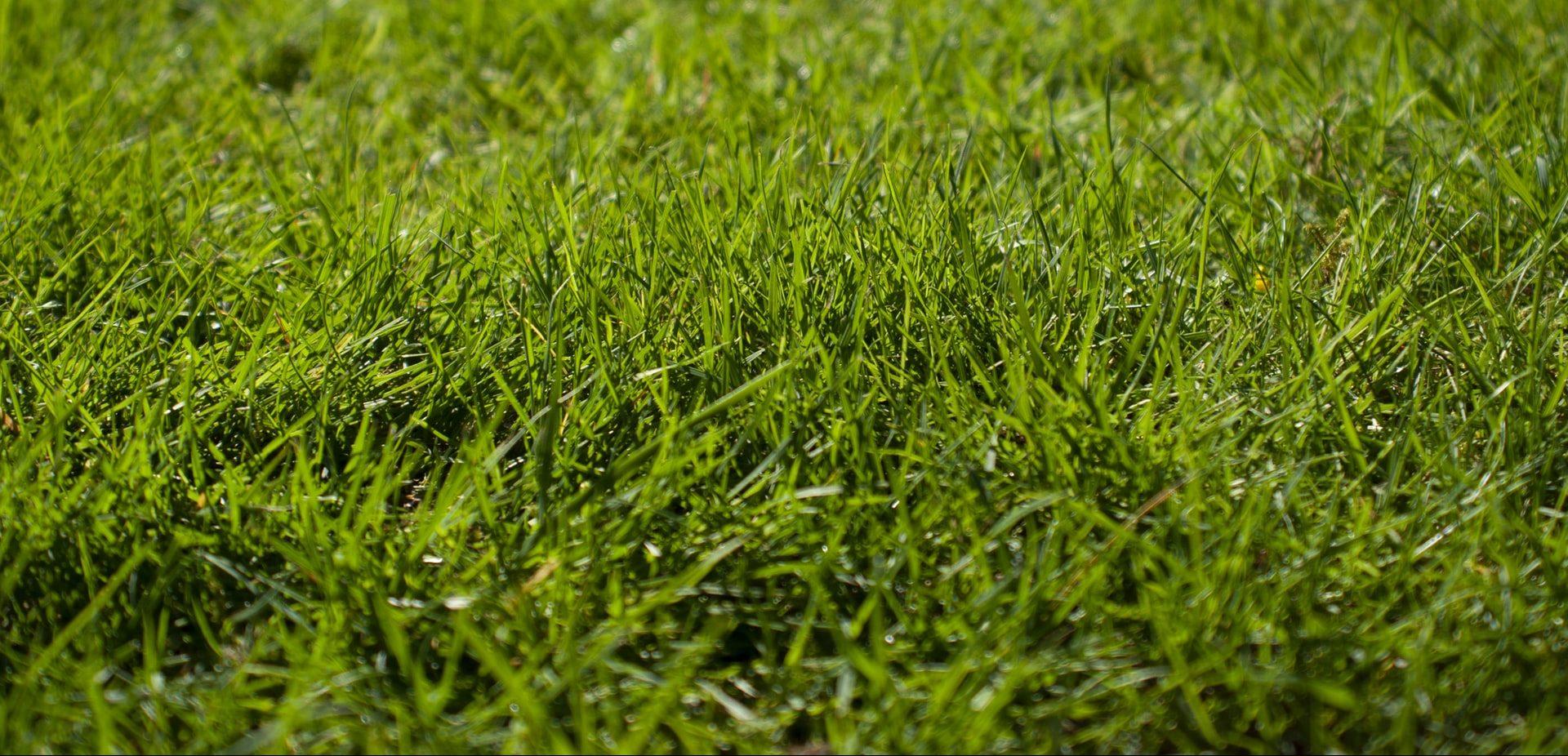 Ist dein Rasen braun trotz Regen? – 5 Schritte zu einem saftig, grünen Rasen