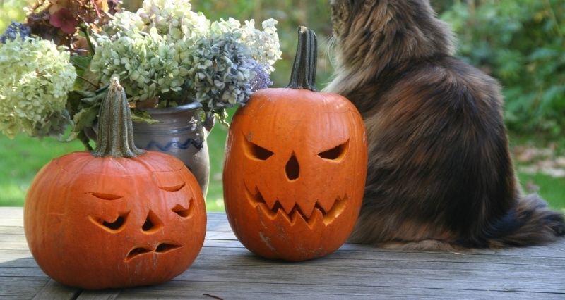 Halloween Gartendeko Test