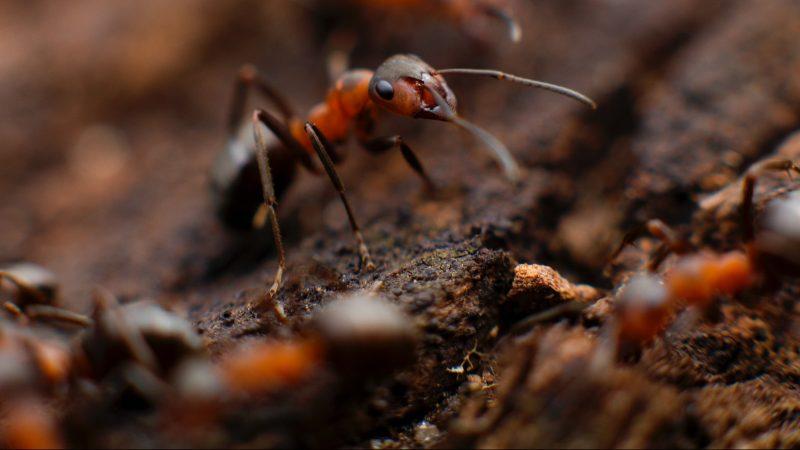Was hilft gegen Ameisen Hügel im Garten? – 4 einfache Möglichkeiten