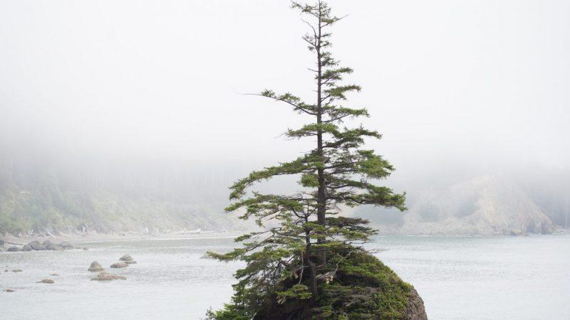 Die 8 besten Bäume für deinen Steingarten!