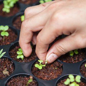 Warum Bio Saatgut? – 7 gute Gründe für Bio-Samen