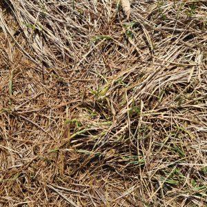 Wie behandle ich verbrannten Rasen? – 8 Ursachen und Behandlungen