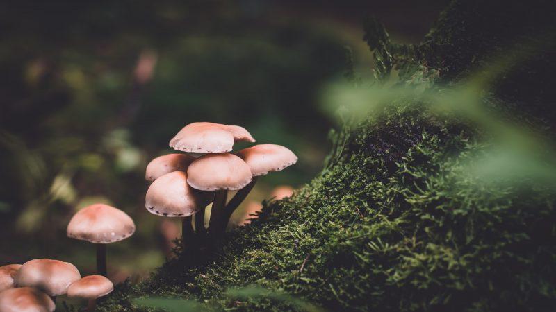 Wie man Pilze im Garten loswird – Die häufigsten Methoden